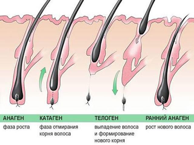 паразиты живущие под кожей человека