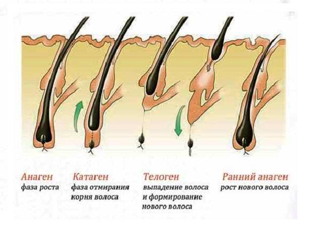 Почему секутся волосы и ломаются