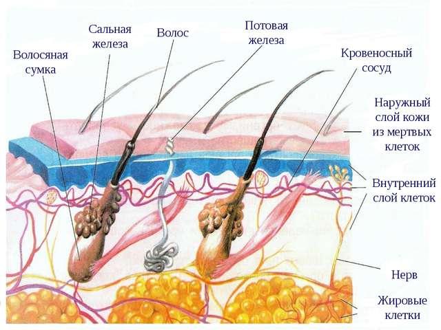 Отзывы спрей эксперт волос